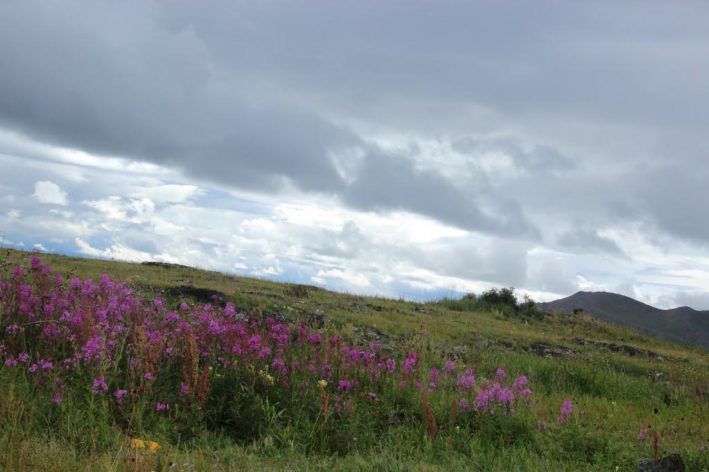 At the Shore of Tsagan Nuur