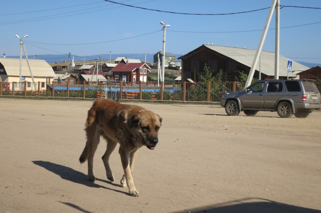 Stray Dog in Chushir