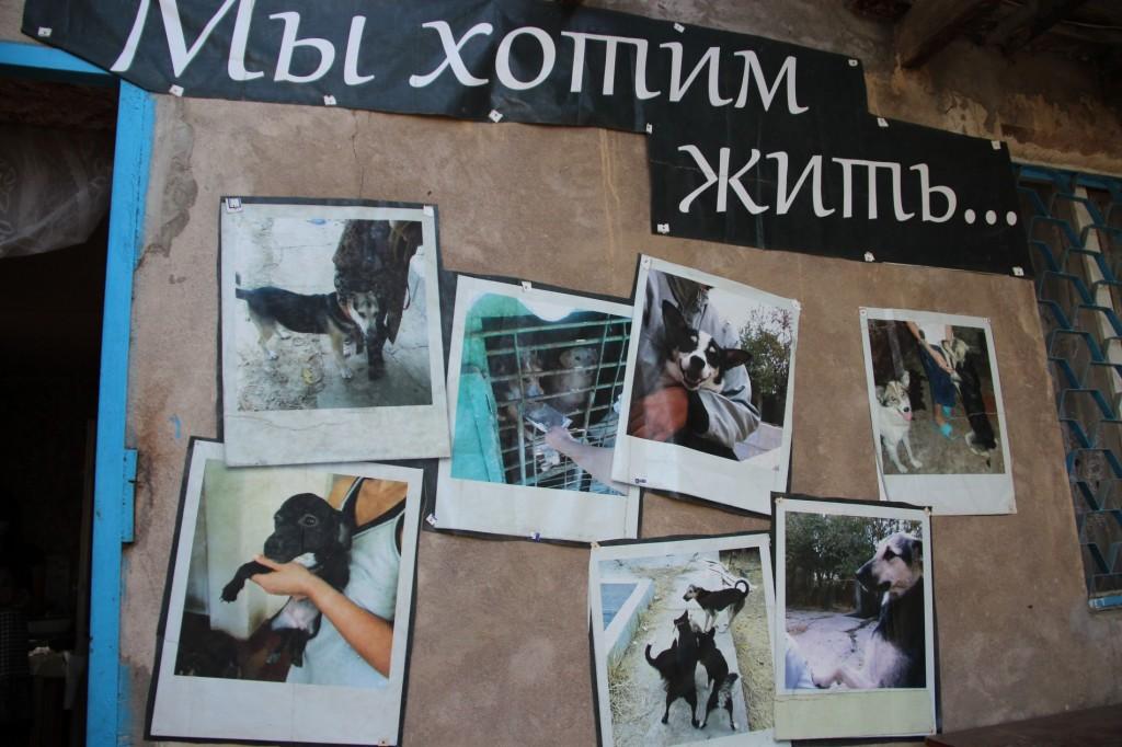 Plakat der Tierschutzorganisation
