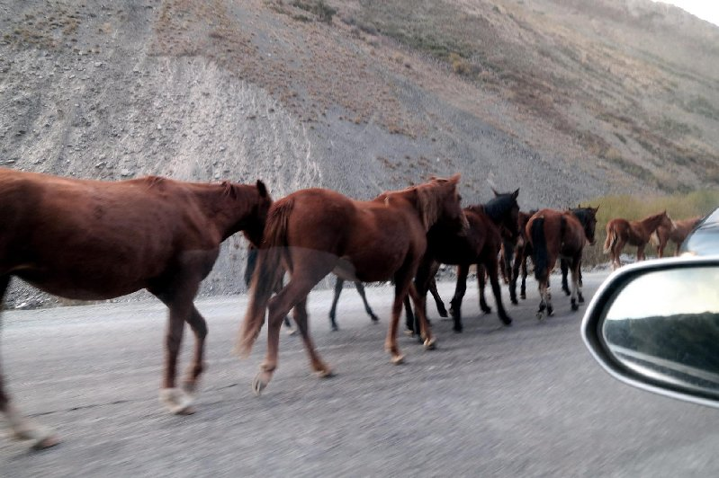 Horses on the Road