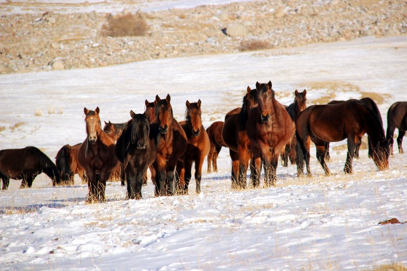 Kyrgyz Horses - Outside at all Times