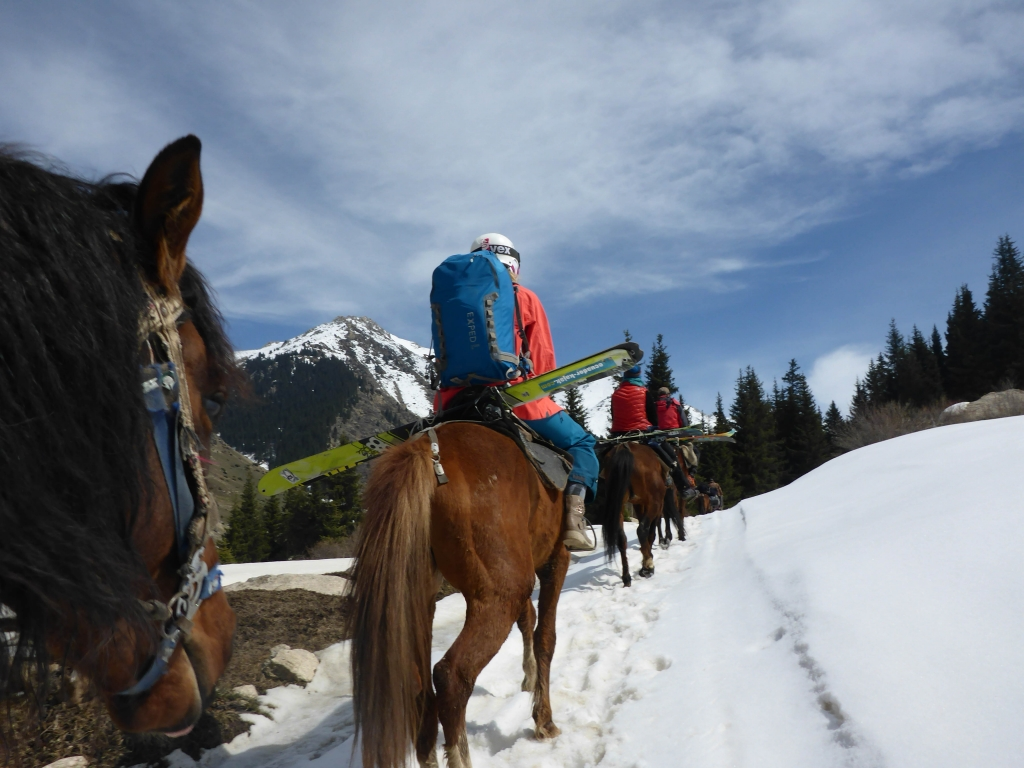 Skis tied across the horse's back, Kyrgyzstan, Ak Suu