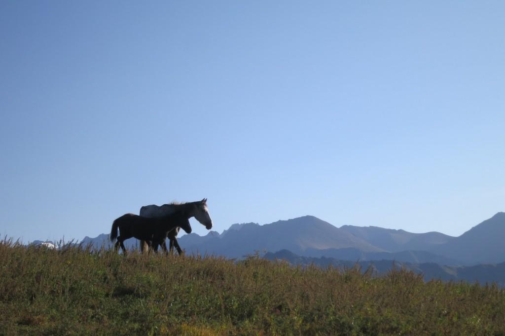 Freie Pferde in den Bergen