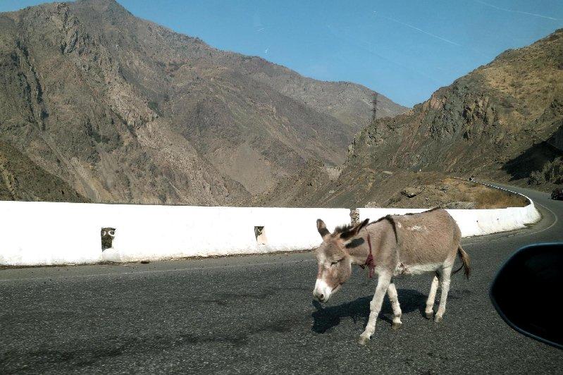 Road Donkey