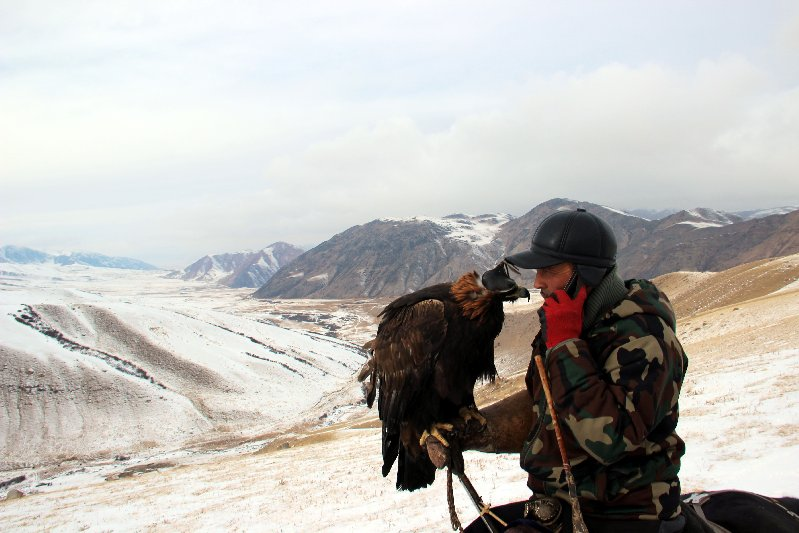 Eagle and Phone - No Problem