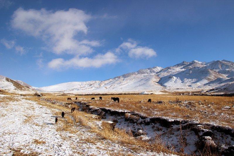 Loads of Livestock